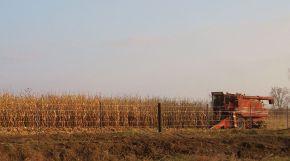 A combine harvesting corn in Iowa